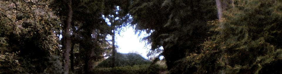 Achtergrond bomen Keukenhof